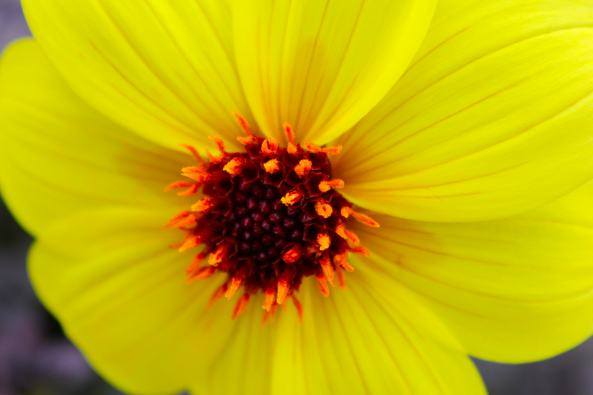 Flower unfurled