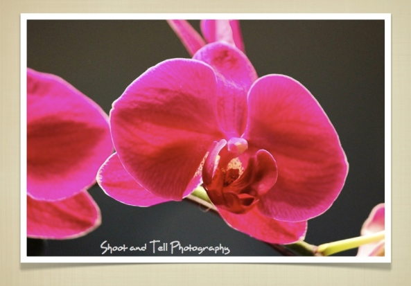 Orchids Singapore.001