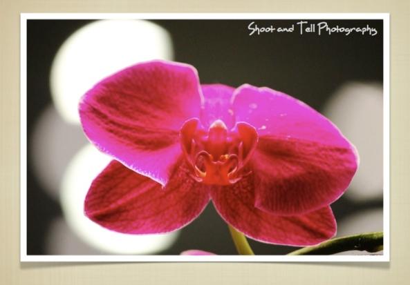 Orchids Singapore.002