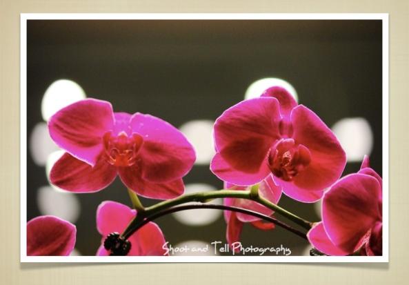 Orchids Singapore.003