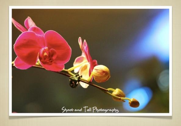 Orchids Singapore.004