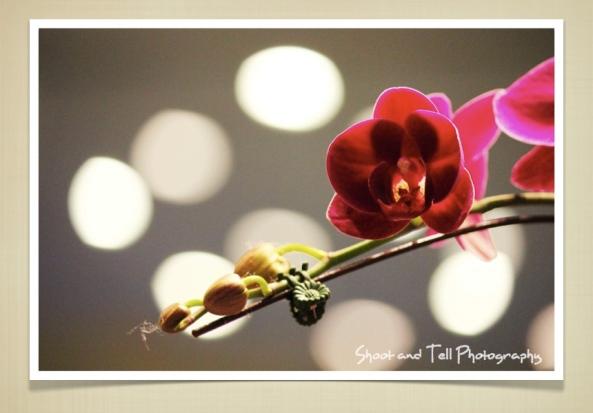 Orchids Singapore.006