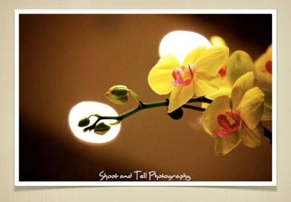 Orchids Singapore.007