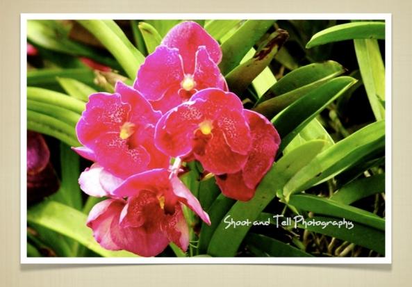 Orchids Singapore.009