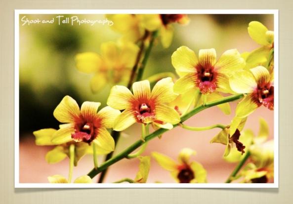 Orchids Singapore.013