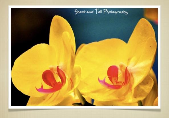 Orchids Singapore.014