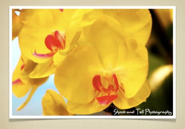 Orchids Singapore.015