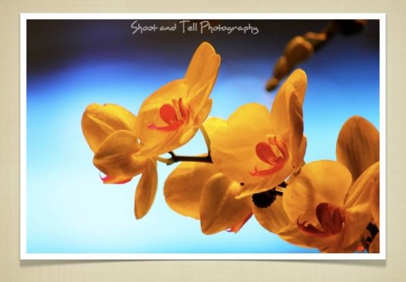 Orchids Singapore.016