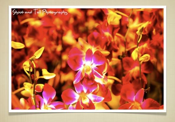 Orchids Singapore.017