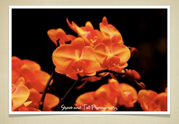 Orchids Singapore.018