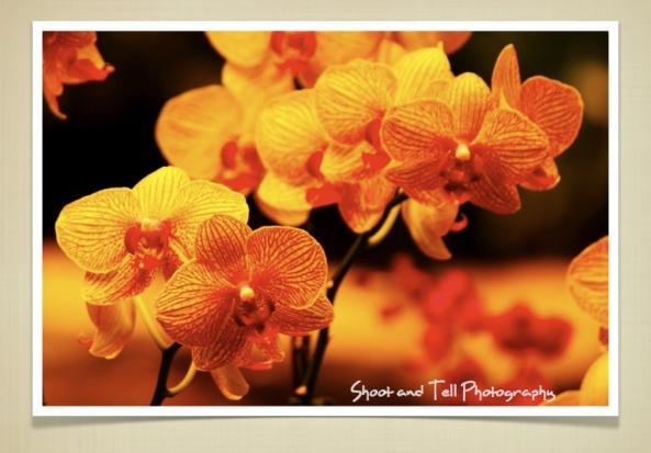 Orchids Singapore.019