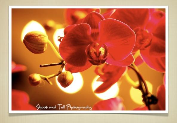 Orchids Singapore.020