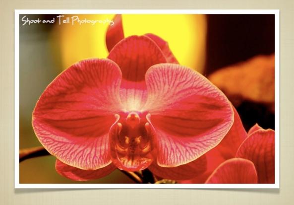 Orchids Singapore.021