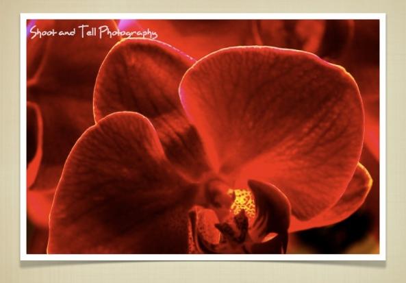 Orchids Singapore.023