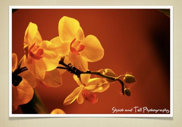 Orchids Singapore.024