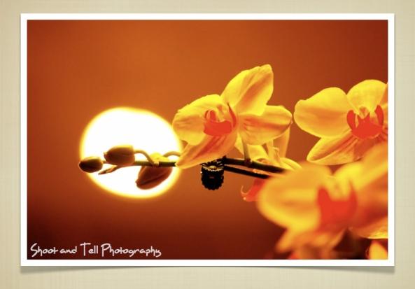 Orchids Singapore.025