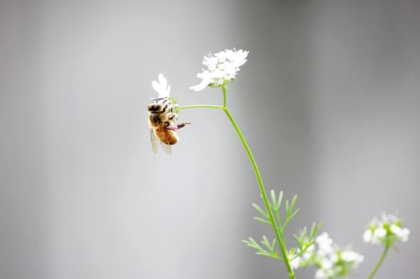 Bee_buzz