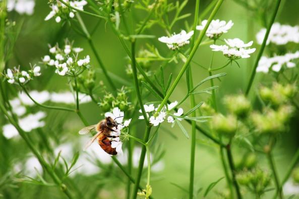Bee_buzz2