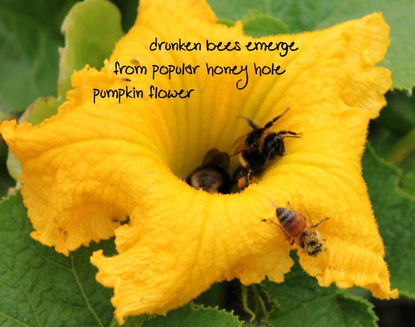 haiku poems about flowers - photo #23