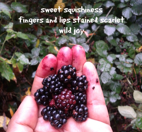 picking blackberries2