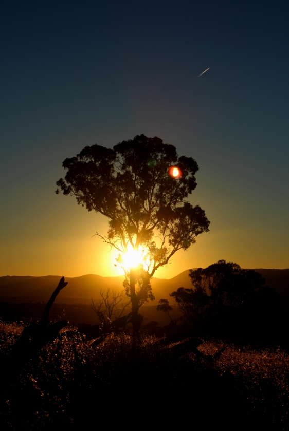 Sunset_tree