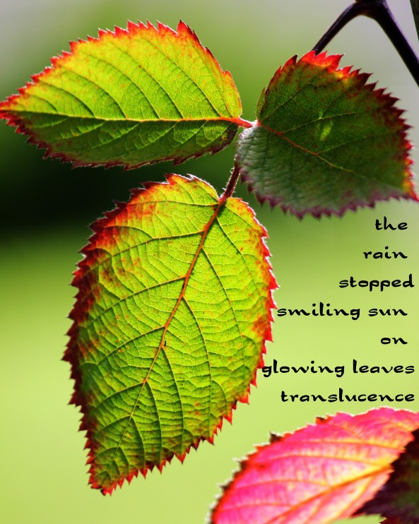 After the rain - haiga