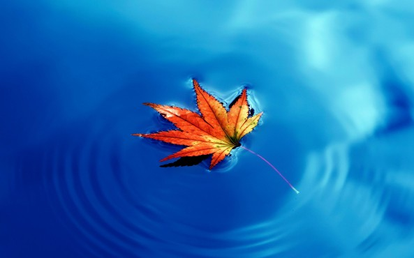autumn-maple-leaf-water