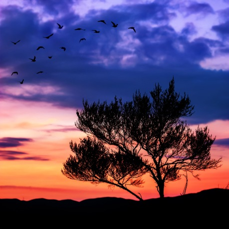 Hutt Sunset_birds